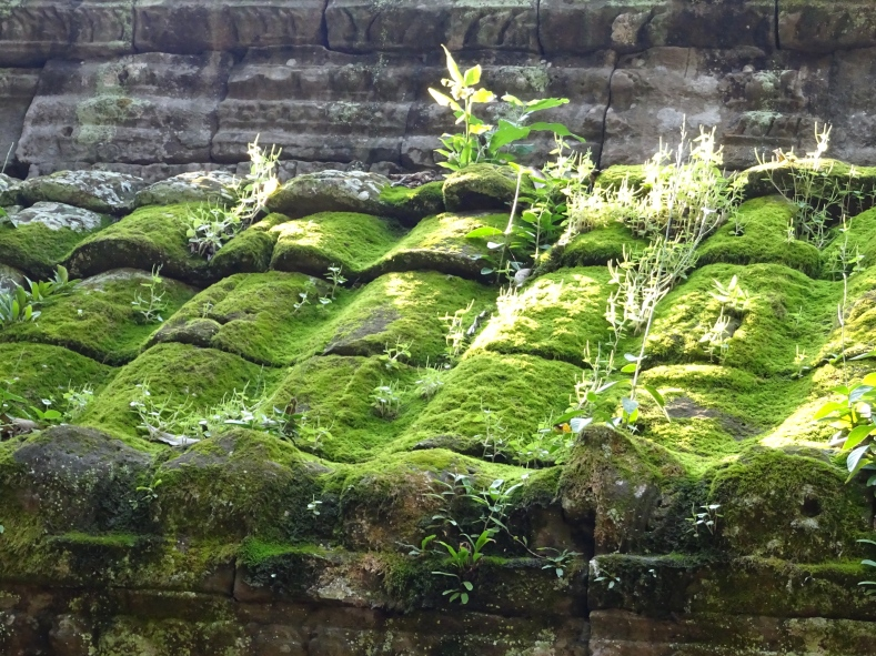 Moss on tiles at Ta Prohm